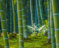 木に竹を接ぐ 意味 例文 使い方 類語 英語