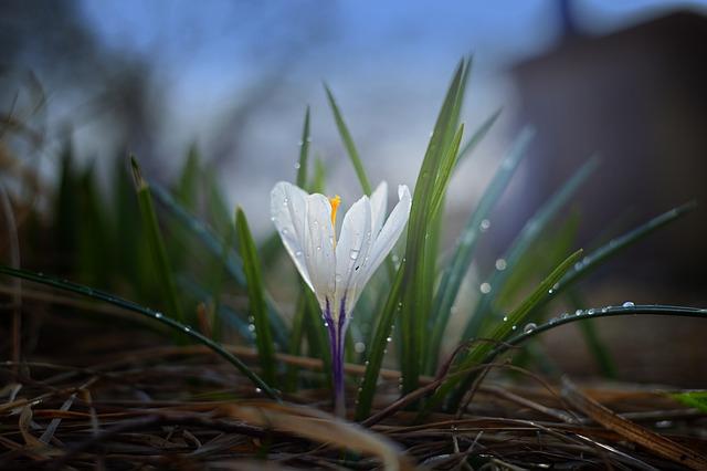 春眠暁を覚えず 春はあけぼの 違い