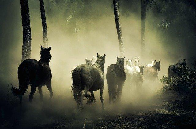 馬脚を現す 意味 使い方 語源 由来 類語 英語