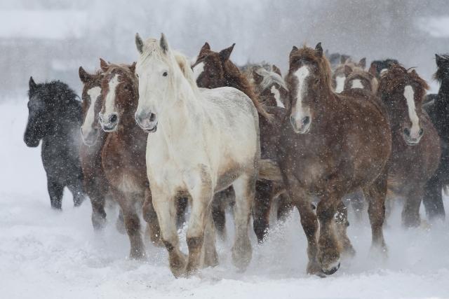 馬の骨 類義語 言い換え 対義語