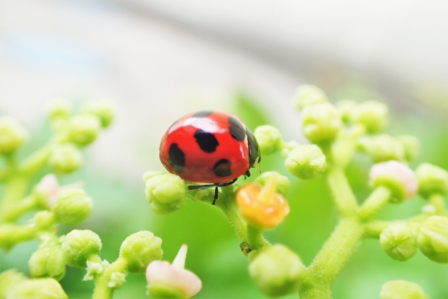 虫がいい 意味 語源 使い方 例文 類語 同義語