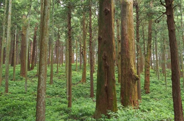 木を隠すなら森の中 意味 語源 由来 使い方 例文