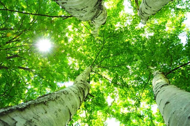 木を隠すなら森の中 類義語 対義語