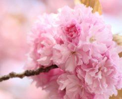 春風駘蕩 意味 使い方 例文 類語 対義語 英語