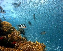 海の命 意味調べ 語句 ノート ワークシート